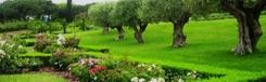 Parc de Cervantes: de rozentuin van Barcelona